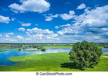 beautiful view on flowed field in spring