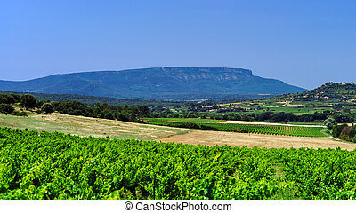 Beautiful view to vineyards in Provence