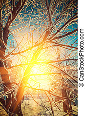 beautiful view trough crone of frosted tree on sun instagram sti