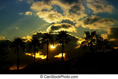 Beautiful view with nature and silhouette palm tree on the sky at sunset time