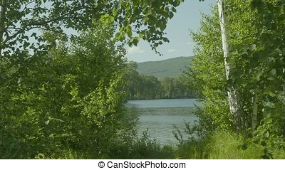 Beautiful views through the large green trees on a lake outside of town