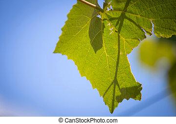 Beautiful vine creeper