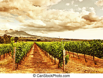 Beautiful vineyard