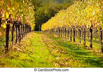 Beautiful Vineyard in Fall