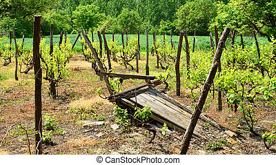 Beautiful vineyard landscape
