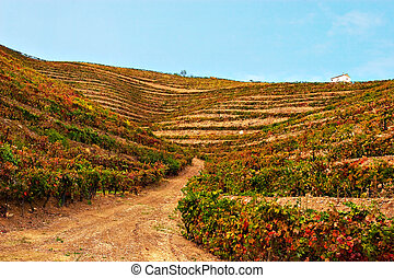 Beautiful Vineyard Landscape with a blue sky