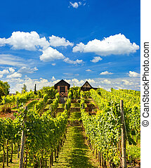 beautiful vineyard landscape with cloudy blue sky