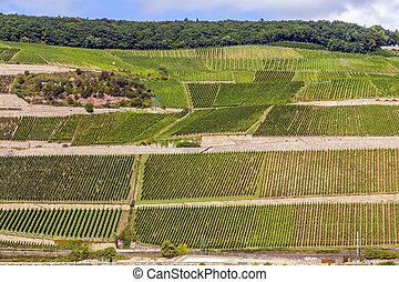 beautiful vineyards at the rhine valley in Ruedesheim -...