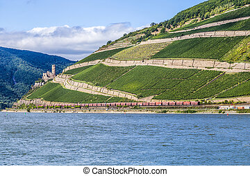 beautiful vineyards at the rhine valley in Ruedesheim with...