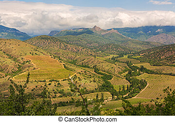 Beautiful vineyards in mountains of Crimea