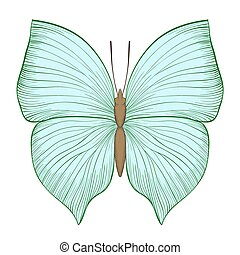 beautiful vintage green butterfly isolated on white background.