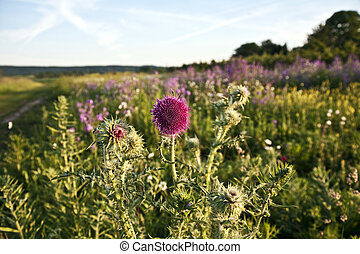 beautiful violet flower in the meadow