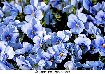 beautiful violet flowers background