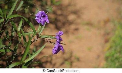 Beautiful violet flowers in garden