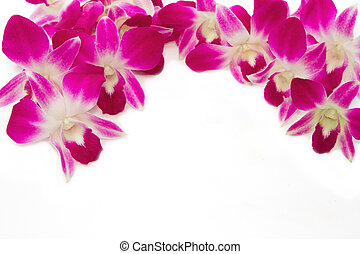 Beautiful violet orchid border
