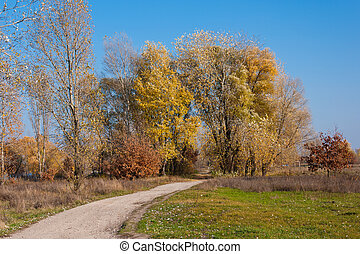 Beautiful walk through the yellow trees in the autumn park