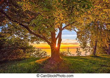 Beautiful warm sunset light shining behind the tree