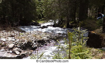 Beautiful water creek in forest