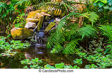 beautiful water pond with tropical plants and a waterfall, exotic garden, nature background