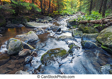 Beautiful water stream deep in the forest.