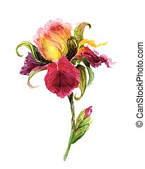 Beautiful watercolor iris flower. Watercolor floral...
