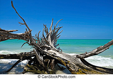 Beautiful Weathered Driftwood on the beach of Beer Can...