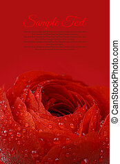 Beautiful wet red flower background with copy-space
