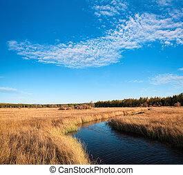 beautiful wetland  in autumn