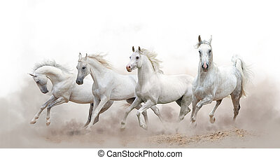 beautiful white arabian horses running over a white...
