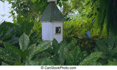 Beautiful white butterfly house and its gorgeous inhabitants blue butterflies on green leaves background.