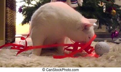 Beautiful white cat wearing Christmas thin red ribbon