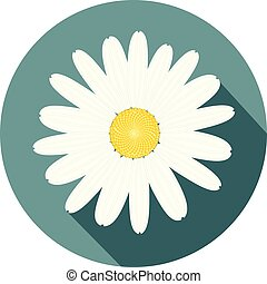 beautiful white daisy flower flat design