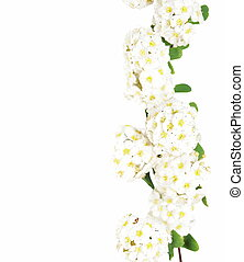 Beautiful white flower isolated on white, with clipping path