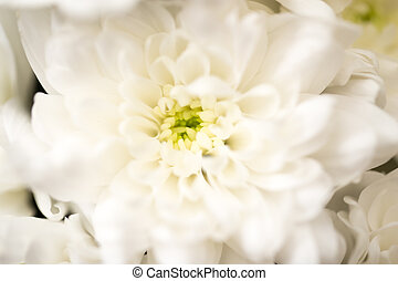beautiful white flower