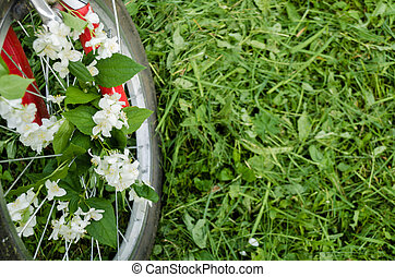 Beautiful white flowers of jasmine in the wheel of a red old bicycle against the background of green trees, mown grass and hemp. Creative romantic vintage concept. Place for text