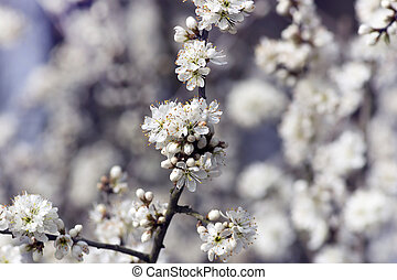 Beautiful white flowers on the bush