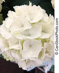 Beautiful white flowers on the market view