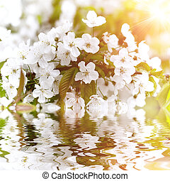 Beautiful white flowers reflected in water