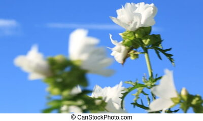 white flowers swaying in the wind