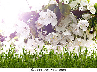 Beautiful white flowers with green grass