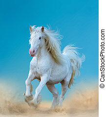 Beautiful white gypsy horse