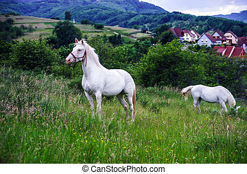 Beautiful white horse in a farm