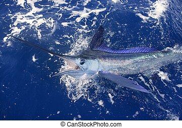 Beautiful white marlin real billfish sport fishing -...