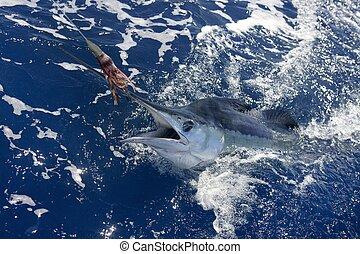 Beautiful white marlin real billfish sport fishing