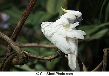 beautiful white parrot