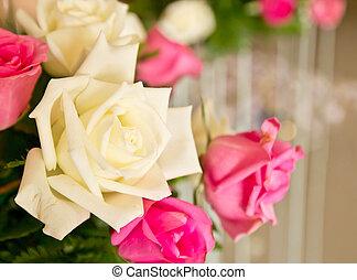 Beautiful white rose close-up