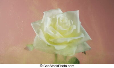 Beautiful white rose covered with fairy golden dust