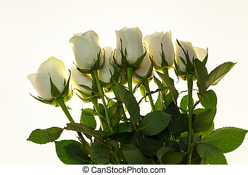 Beautiful white roses in the bouquet, background for wedding cards, greeting card for birthday.