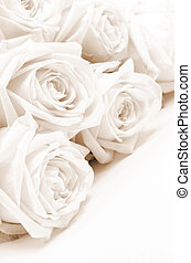 Beautiful white roses. Soft focus. Sepia - Beautiful white...