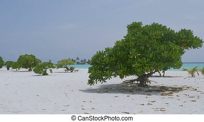 Beautiful white sand beach in Maldives. Luxury holiday by...